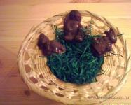 Húsvéti pályázat - Csokinyuszik - Kosárban