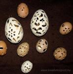 Húsvéti pályázat - Csipkézett tojások - Kész