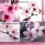 Szalvéta - Virágzási idő