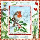 Szalvéta - Vörösbegy télen