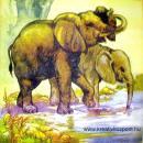 Szalvéta - Elefántok vizet isznak