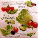 Szalvéta - Saláta növények